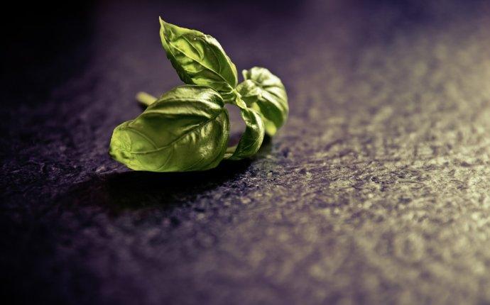 13 Health Benefits & Uses of Sabja Seeds (Tukmaria – Basil Seeds
