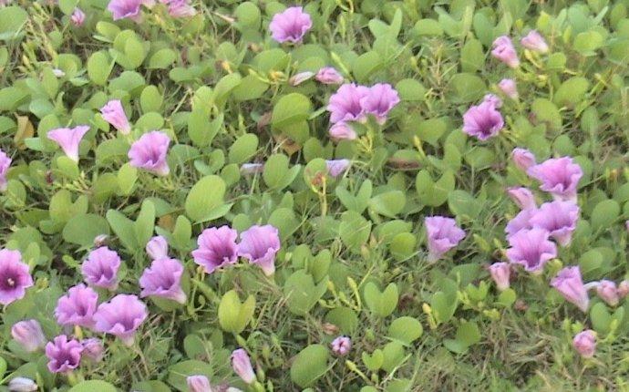 Ayurvedkalyanam: INDIAN AYURVEDIC PLANTS FOR GLOBAL HEALTH