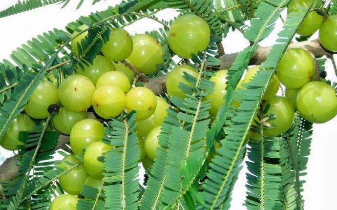 List Of Ayurvedic Medicinal Plants In Hindi