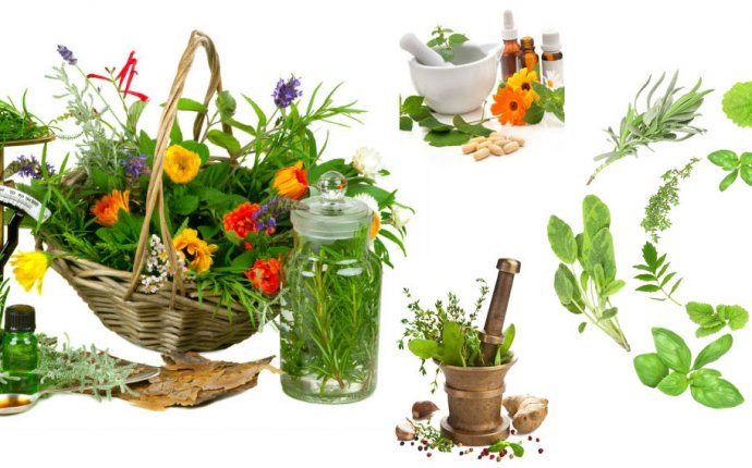 Shrihtrading.com Ayurvedic & Herbal Products info@shrihtrading.com