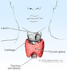 thyroid remedies
